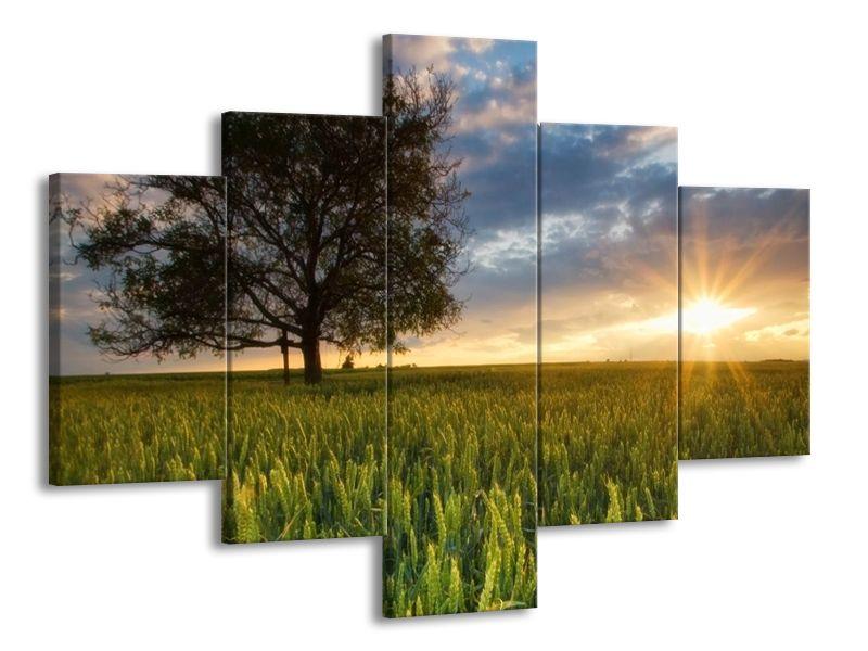 Západ slunce na zeleném poli