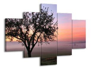 Strom v ranním oparu