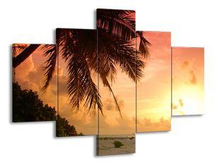 Palmový zázrak