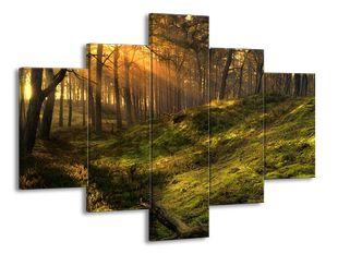 Lesní pohádka