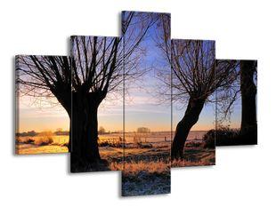 Stromy po ránu