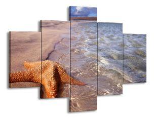 Hvězda na pláži