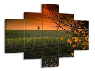 Pole na podzim
