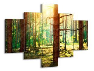 Sluneční paprsky v lese