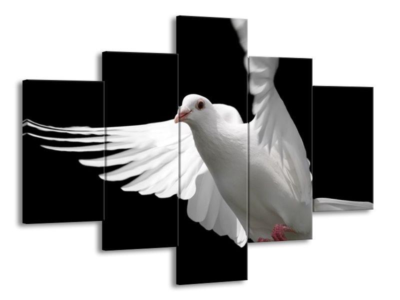Letící bílá holubice