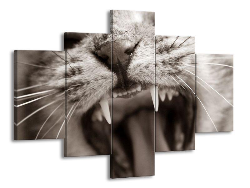 Kočičí zívnutí