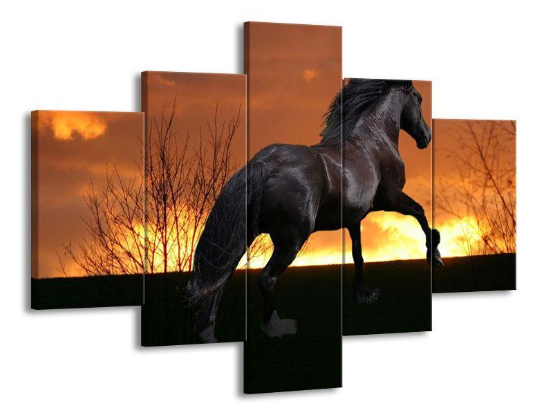 Černý kůň při západu slunce