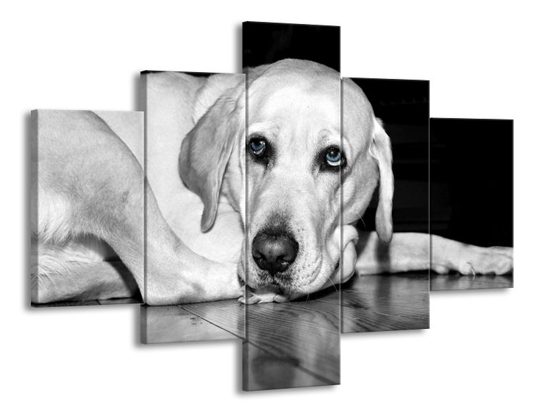 Psí oči černobíle