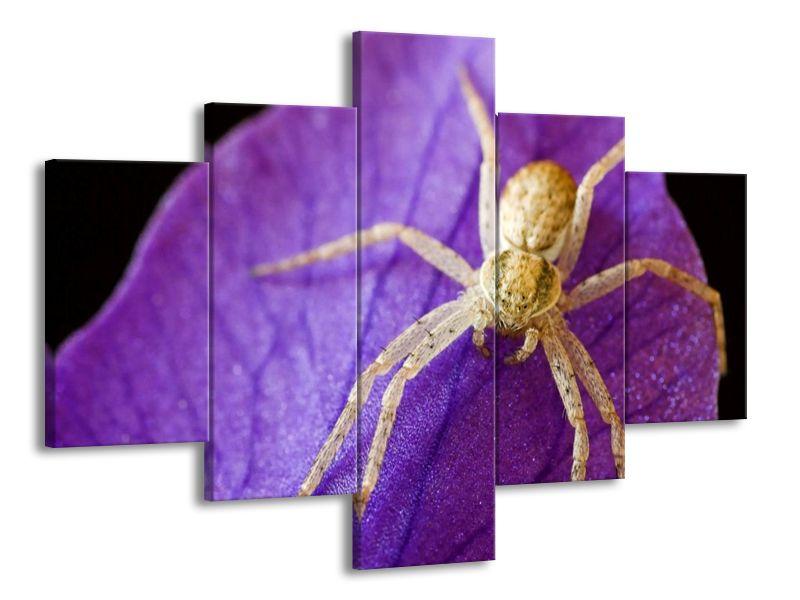 Pavouček na listu