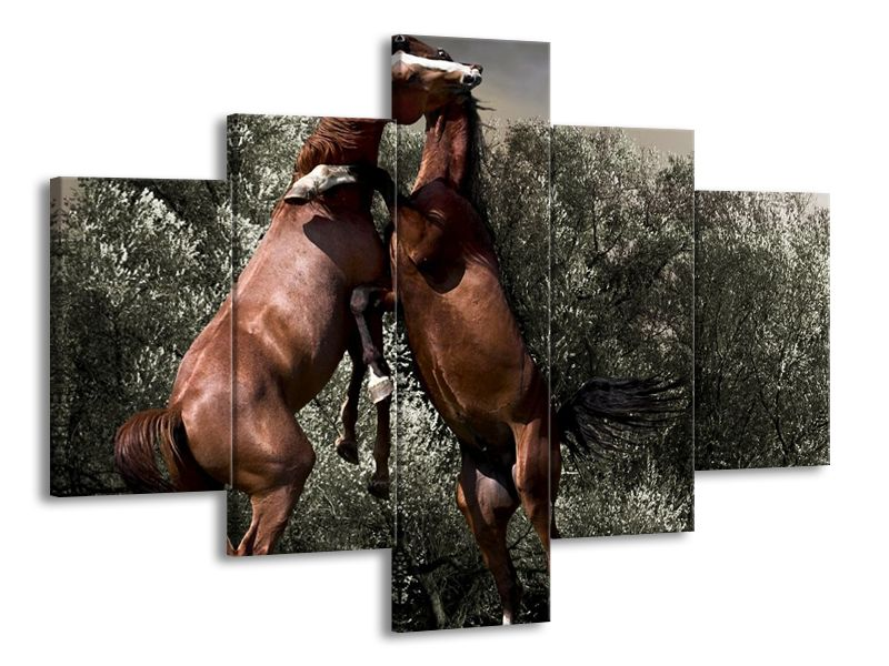Hnědé koně