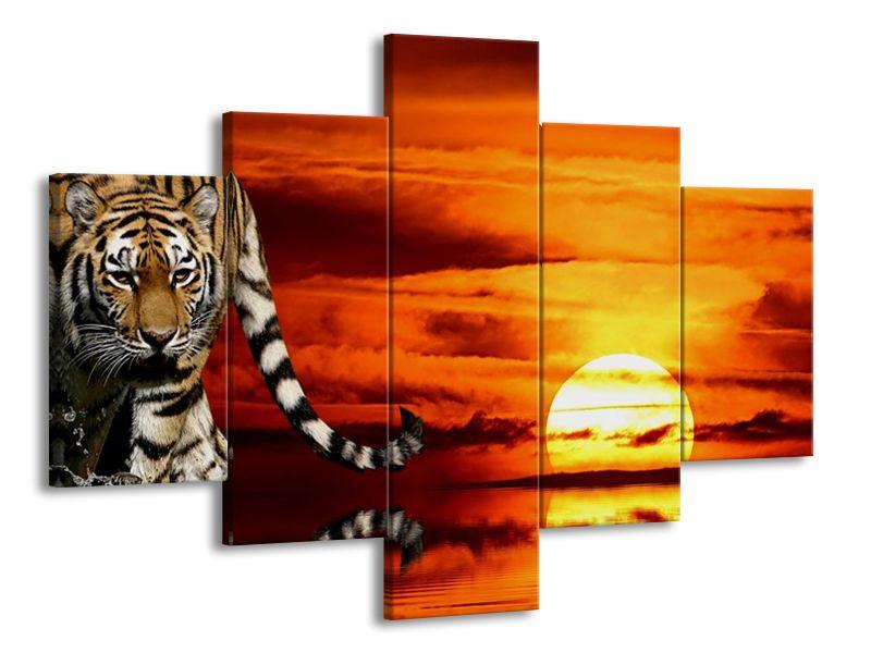 Tygr a západ slunce