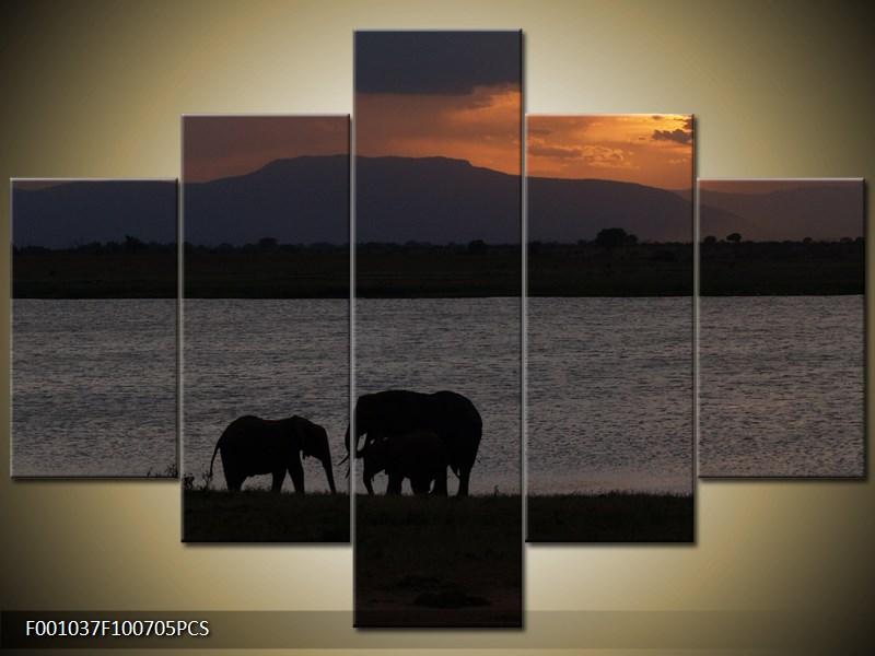 Sloní rodina u vody