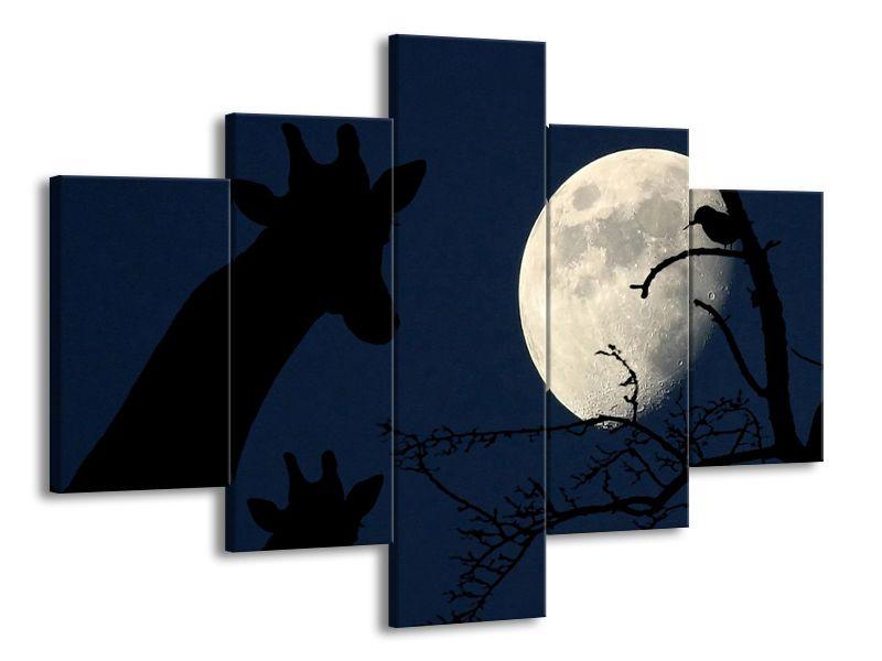 Žirafy a měsíc