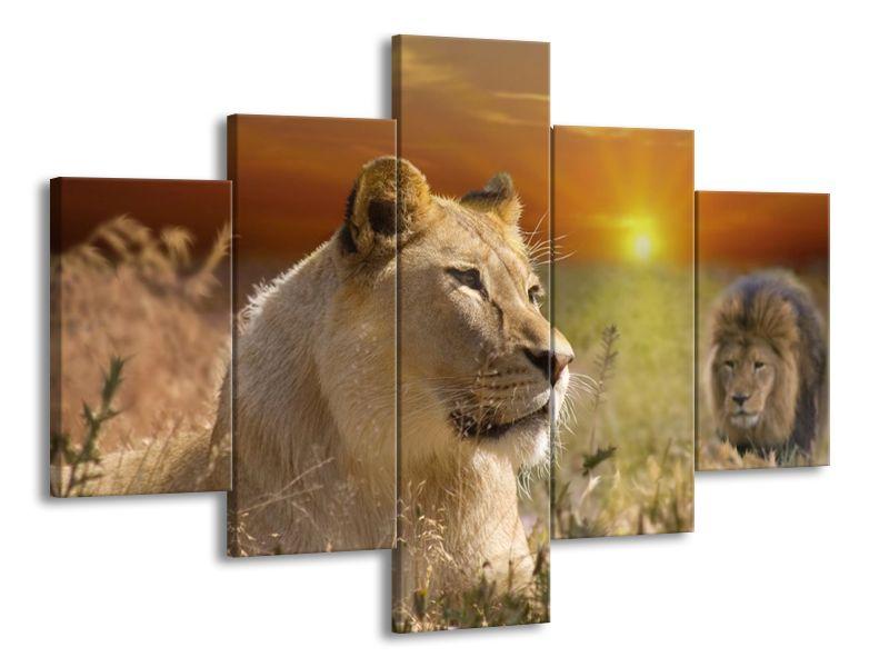 Lví rodina