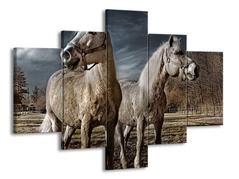 Šedí koni