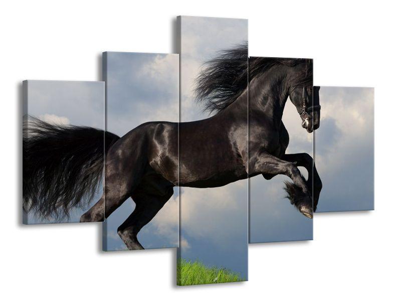 Krásný černý kůň
