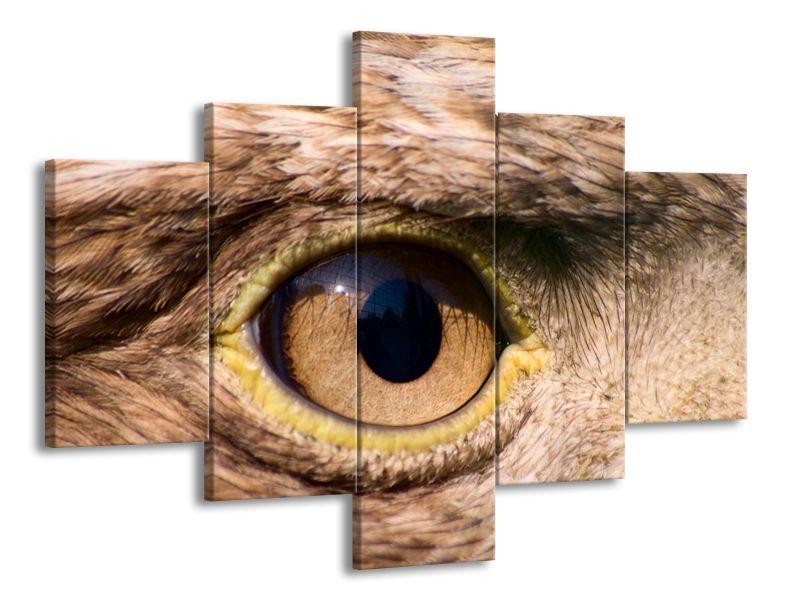 Moudré oko