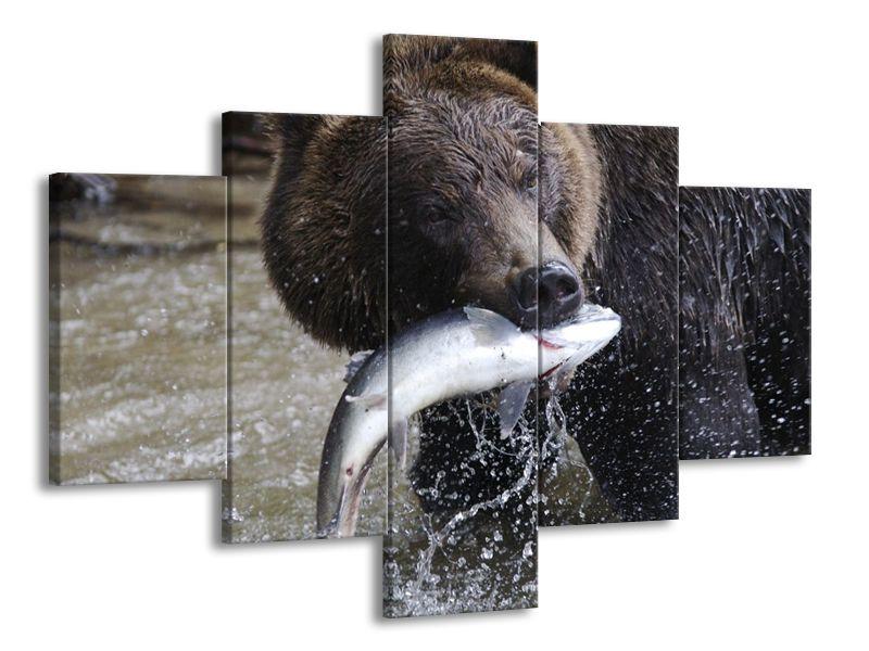 Lovící medvěd