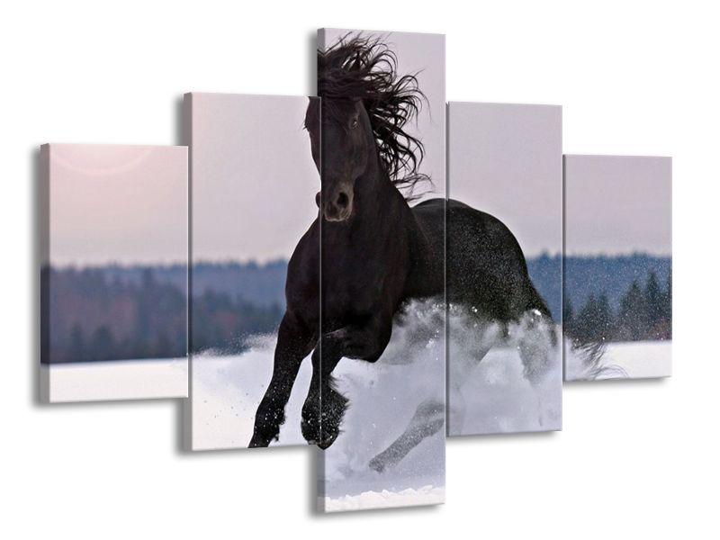 Kůň ve sněhu
