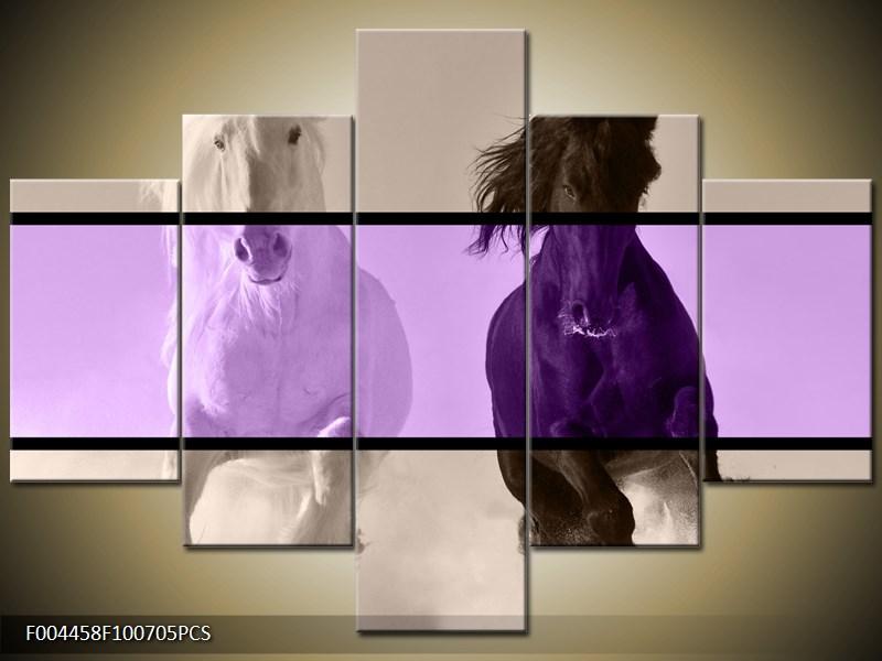 Černý a bílý kůň