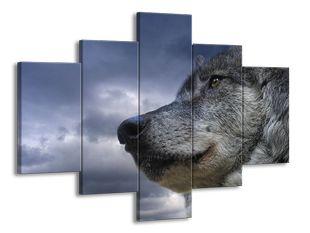 Pohled vlka