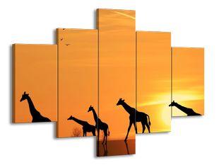 Siluety žiraf v poušti