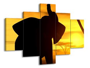 Slon a západ slunce