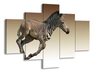 Zebra v běhu