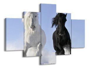 Koně běžící ve sněhu