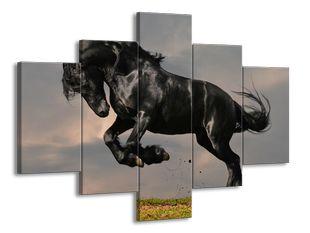 Černý kůň ve skoku na louce