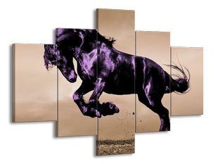 Lesklý černý kůň v poskoku