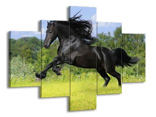 Černý kůň v pohybu