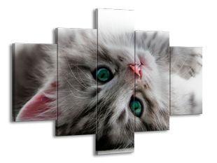 Zelenooké koťátko
