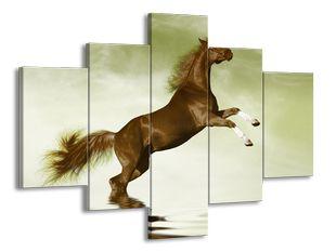 Hnědý kůň ve vodě při skoku