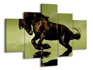 Černý kůň ve vodě