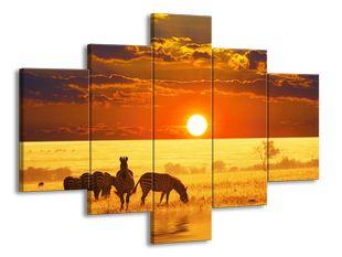 Zebry u západu slunce