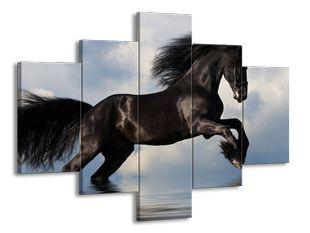 Černý kůň ve vodě při skoku