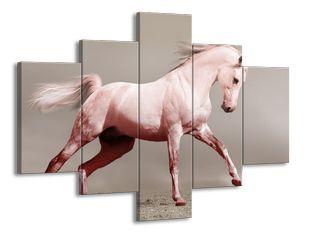 Bílý kůň v běhu