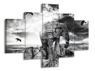 Slon černobíle