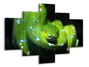 Stočený zelený had