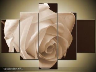Nevinná růže