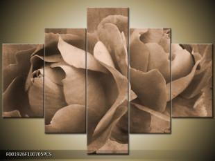 Vzpomínka na růži