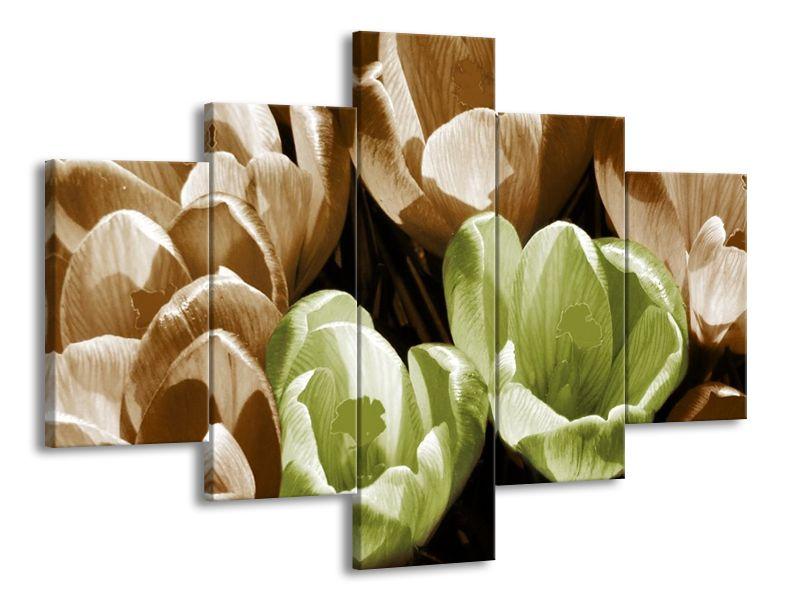 Pár tulipánů