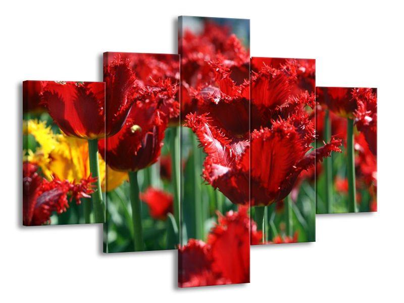 Střapené červené tulipány