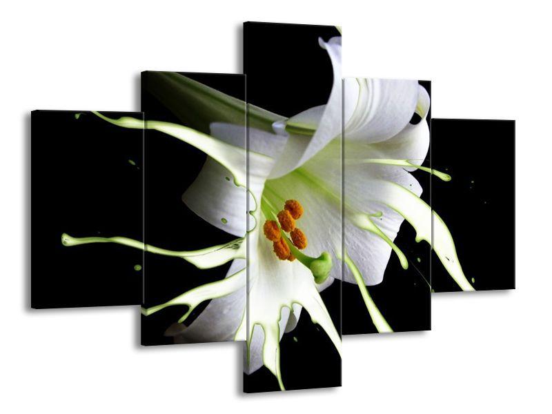 Mléčná lilie