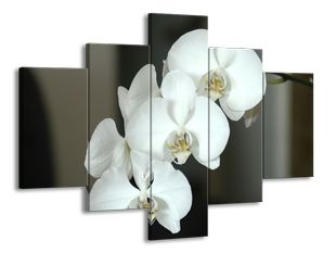 Nevinnost orchideje