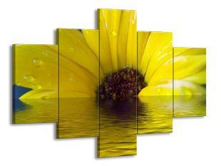Žlutá květina ve vodě