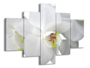 Sněhová orchidej