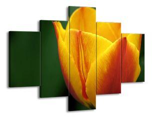 Ohnivý tulipán