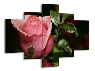 Růžové poupátko